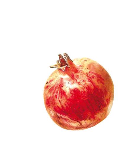 Pomegranate - watercolour 2014