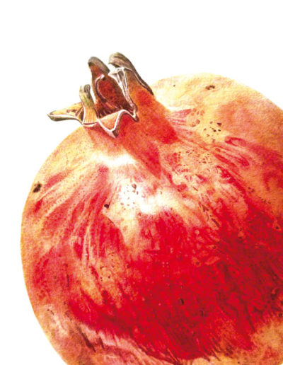 Pomegranate - watercolour 2014