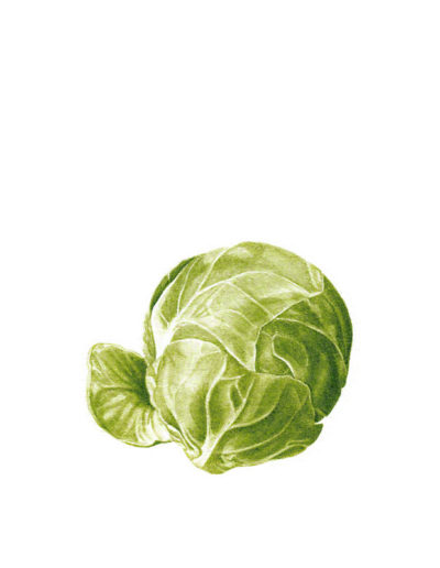 Sprout - watercolour 2014