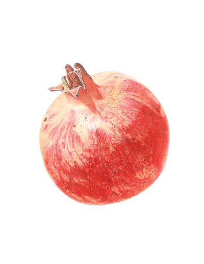 Pomegranate - watercolour on Fabriano 5