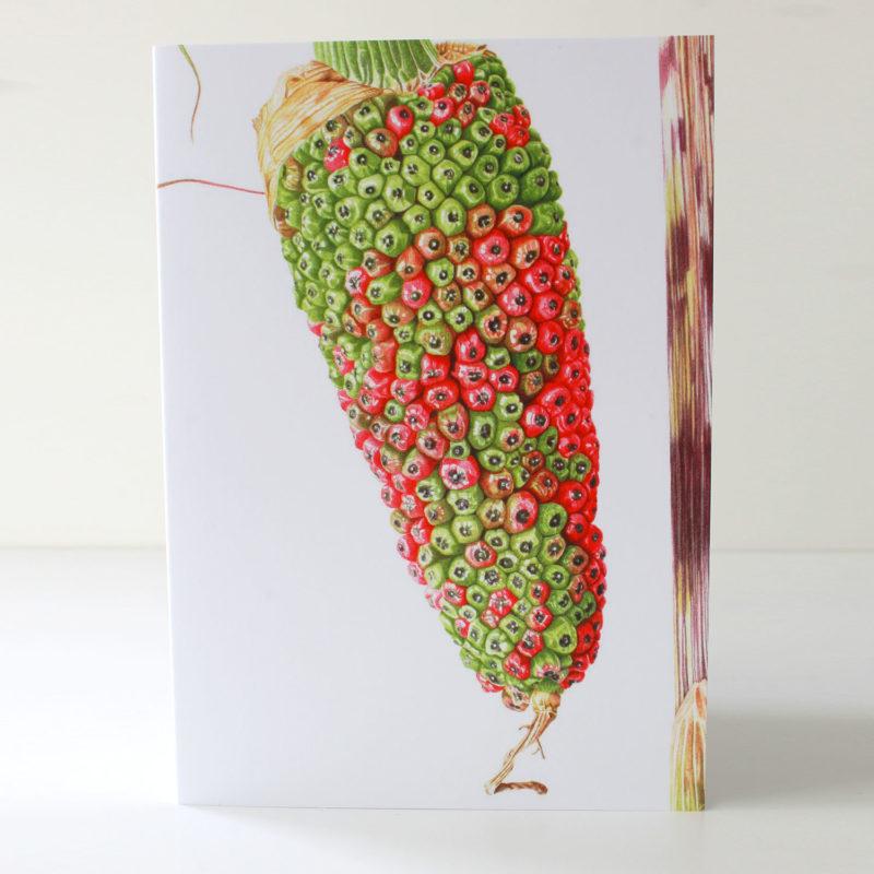 Arisaema consanguineum card