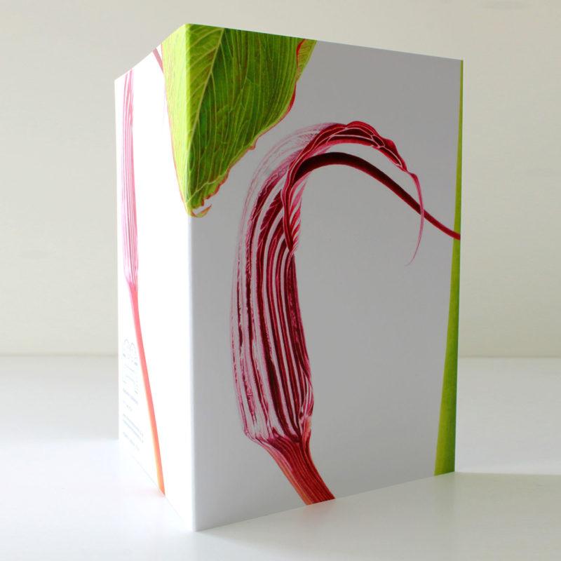 Arisaema costatum card