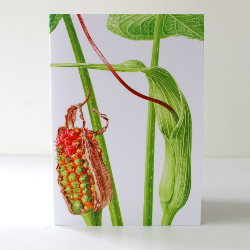 Arisaema intermedium card
