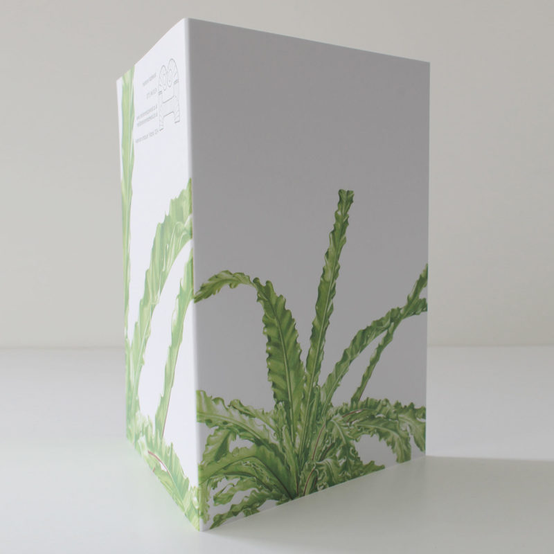 Asplenium antiqum Victoria card
