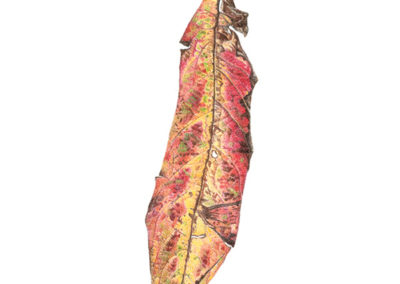colour-pencil-leaf-crop