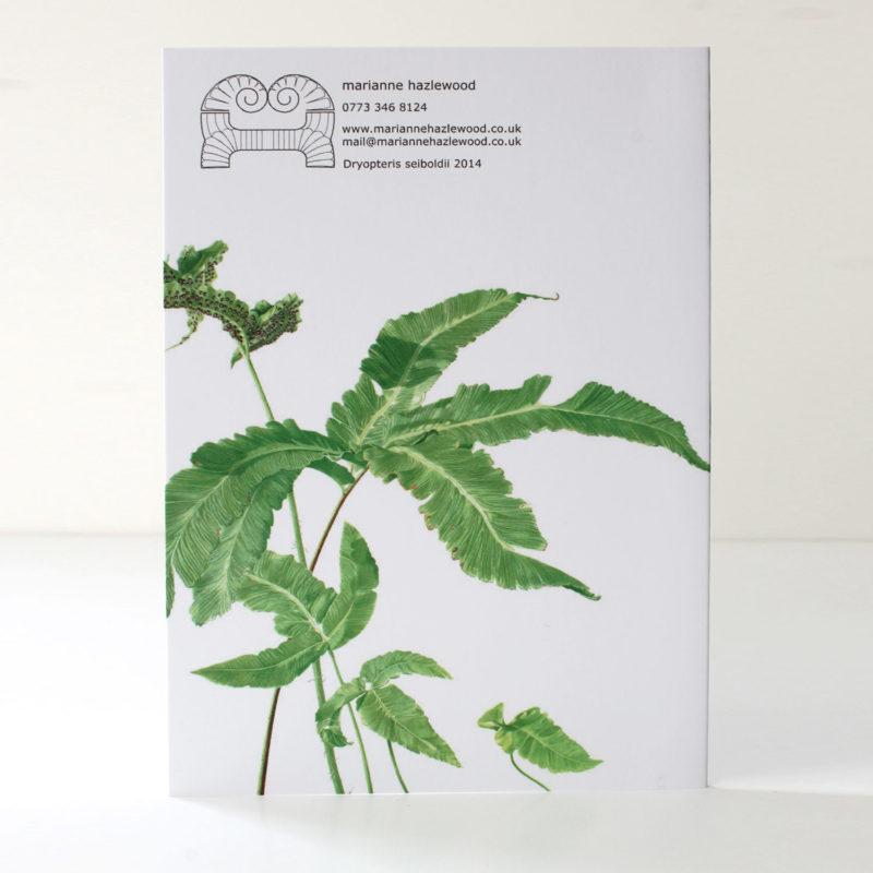 Dryopteris seiboldii card