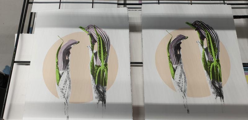 Screen print A. ringens prints