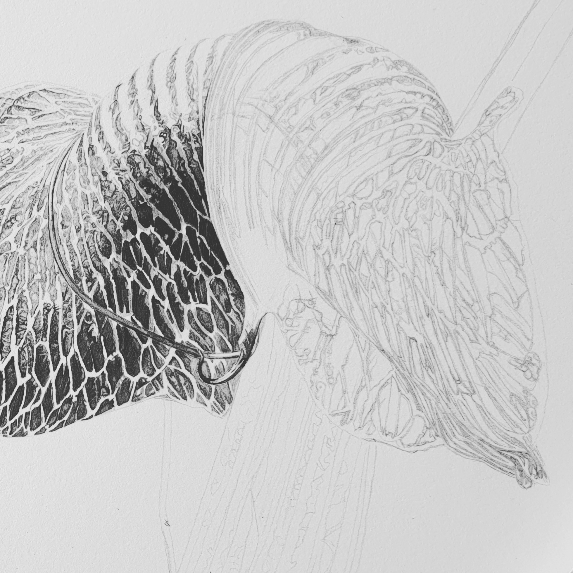 Progress shot - Arisaema griffithii var. pradhanii Japanese ink paste on Lambeth Cartridge