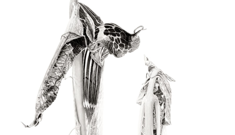 Arisaema griffithii ink shoots Japanese ink paste on Lambeth cartridge - detail