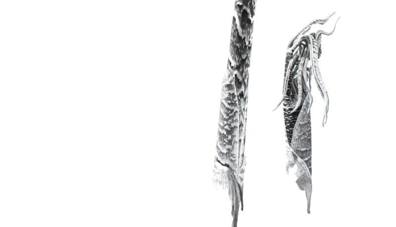 Arisaema tortuosum ink shoots Japanese ink paste on Lambeth cartridge - detail