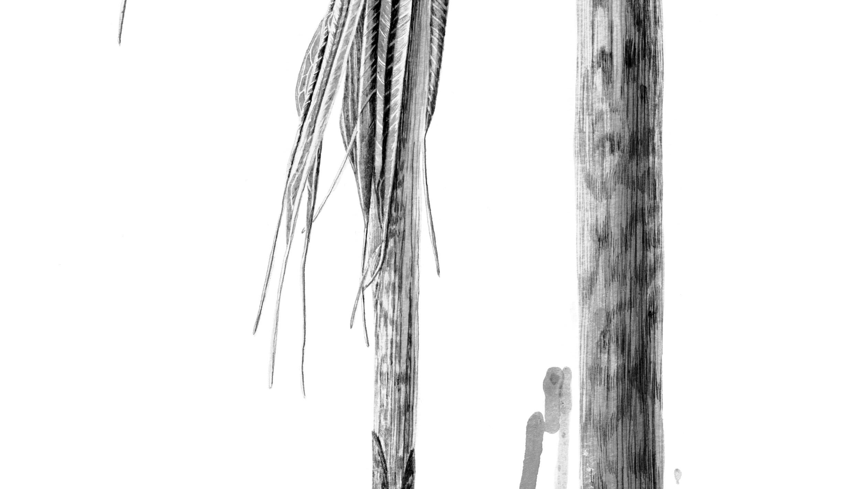 Arisaema consanguineum ink shoots Japanese ink paste on Lambeth cartridge - detail