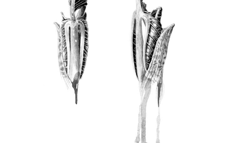 Arisaema intermedium ink shoots Japanese ink paste on Lambeth cartridge - detail
