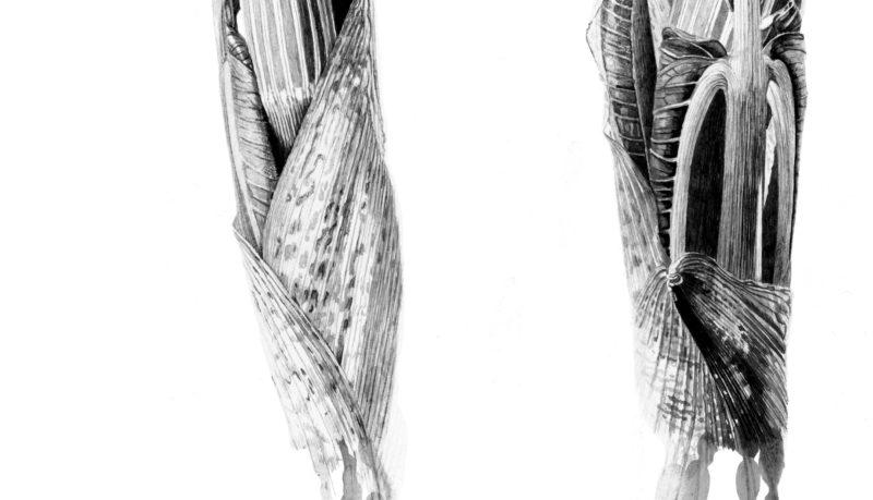 Arisaema ringens ink shoots Japanese ink paste on Lambeth cartridge - detail
