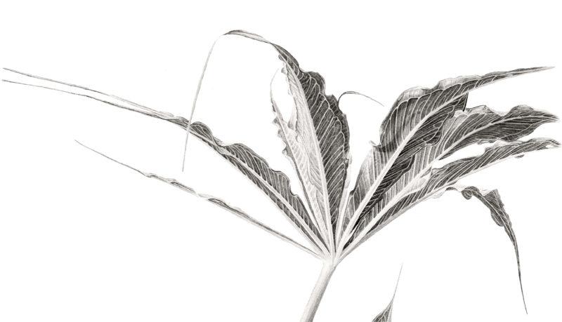Arisaema cilliatum ink shoots Japanese ink paste on Lambeth cartridge - detail