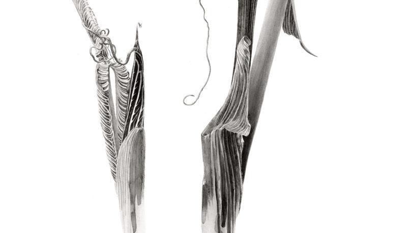 Arisaema costatum ink shoots Japanese ink paste on Lambeth cartridge - detail