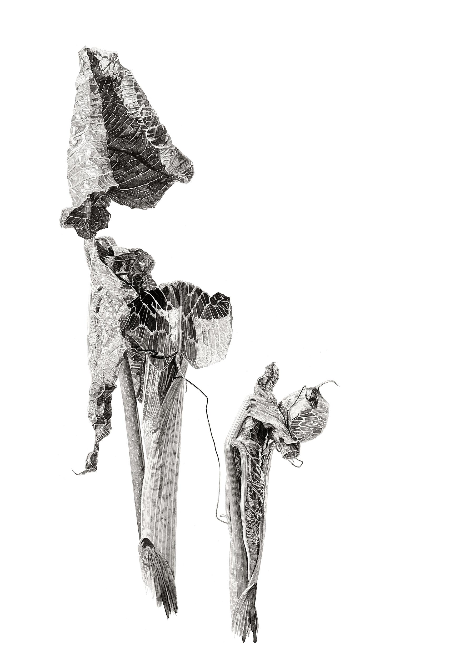 Arisaema griffithii ink shoots II Japanese ink paste on Lambeth cartridge