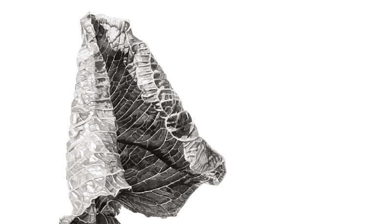 Arisaema griffithii ink shoots II Japanese ink paste on Lambeth cartridge - detail