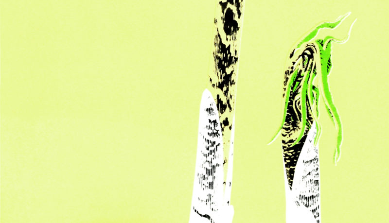 Arisaema tortuosum with geometric styling screen print on Somerset - detail