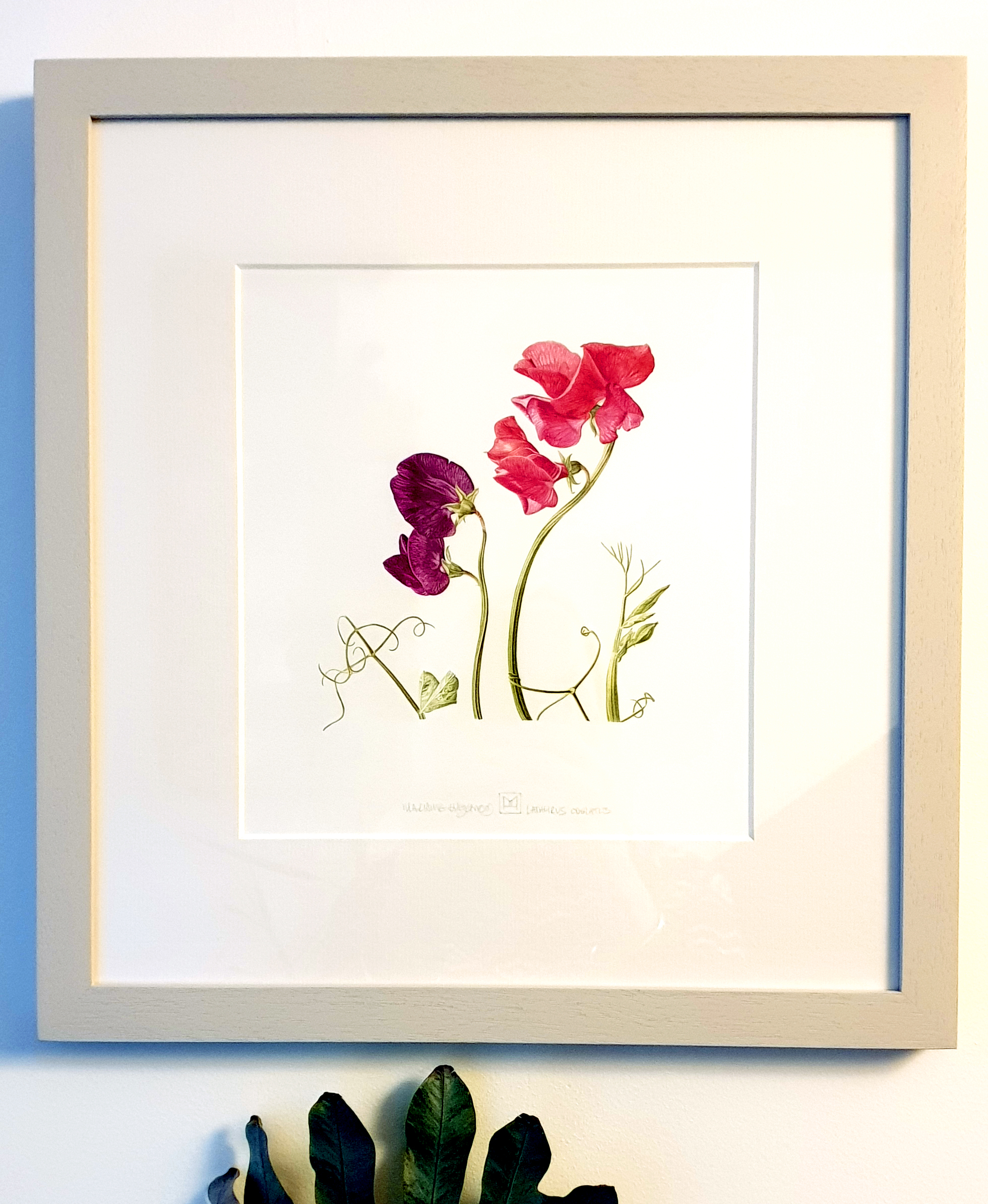 Sweet pea framed